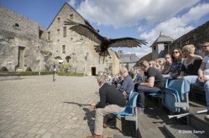 Bouillon - pokaz lotów ptaków drapieżnych, Photo: David Samyn